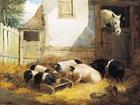Просмотреть foto Корм для животных Свиной комбикорм КК 58 в Балашихе 68034252 в Балашихе