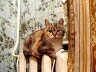 Просмотреть foto  Кошечки ищут дом!Дружные, ласковые, в еде не прихотливы, приучены к лотку, мебель не дерут (есть когтедёрка), спокойные, не требуют постоянного внимания к себе, 69064009 в Москве