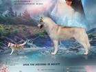 Увидеть фотографию Вязка собак Кобель сибирский хаски для племенного разведения 69664995 в Барнауле