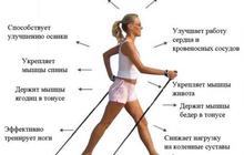 прочные и лёгкие палки для скандинавской ходьбы
