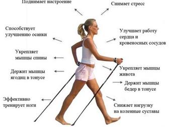Скачать бесплатно foto Разное прочные и лёгкие палки для скандинавской ходьбы 32774947 в Барнауле