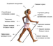 Фото в Бытовая техника и электроника Разное Скандинавская ходьба – это ходьба с палками, в Барнауле 0