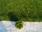 Новое изображение Ландшафтный дизайн Ландшафтный дизайн, озеленение, благоустройство в Шебекино, Белгороде и Белгородской области 68602576 в Белгороде