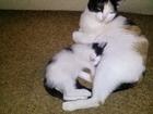 Увидеть фото Отдам даром - приму в дар Отдам котёнка в добрые руки 39647653 в Березниках