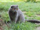 Фото в Потерянные и Найденные Потерянные Пропал кот.     27. 04. в Свердловской области в Березовском 0