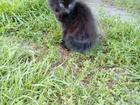 Уникальное фото Отдам даром - приму в дар ОТДАМ КОТЯТ возраст 3 месяца, котята дружелюбны, ласковы, приучены к лотку, ловят мышей, а так же обработаны от паразитов 41157418 в Бийске