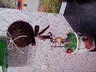 Просмотреть изображение Разное кофейное дерево, дерево счастья 33078040 в Биробиджане