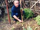 Фото в   Реализую рассаду суперкрупноплодной клубники. в Богучаре 150