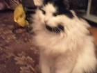 Свежее изображение Потерянные Пропала кошка чёрно-белая 38793972 в Брянске