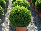 Смотреть фото  Деревья и кустарники в Челябинске 53804888 в Челябинске