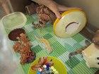 Увидеть foto Другие животные продам ящерок - пятнистые эублефары 67808710 в Челябинске