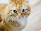Просмотреть фото Отдам даром - приму в дар Супер кот Рой ищет дом и любящую семью! 69171733 в Челябинске