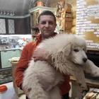 Щенки Маремма абруцкая овчарка