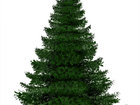 Увидеть фотографию  Продажа новогодних живых елок и их доставка до вашей квартиры 37803175 в Дмитрове