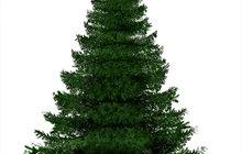 Продажа новогодних живых елок и их доставка до вашей квартиры