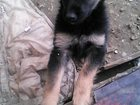 Фото в Собаки и щенки Продажа собак, щенков Отдадим в добрые руки щенка. Девочка. 2 месяца. в Домодедово 50