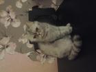 Фото в   Нужен кот для девочки в Домодедово 0