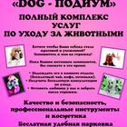 Зоосалон Dog подиум