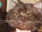 Котик для вязки на выбор вашей кошечки