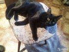 Отдам в добрые руки черного домашнего кота