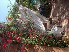 Фото в Недвижимость Аренда жилья Сдаю в Ейске на берегу Азовского моря! домик, в Ейске 0