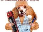 Новое изображение Услуги для животных Курсы груминга 32372115 в Екатеринбурге