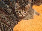 Фотография в Отдам даром - Приму в дар Отдам даром Отдам котят, родившихся 1мая, в хорошие и в Екатеринбурге 0