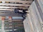 Фото в Собаки и щенки Продажа собак, щенков В связи с продажей дачи отдадим кобеля 1г. в Екатеринбурге 10