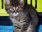 Фотография в   Красавцы-котята ищут дом! Это лето щедро в Екатеринбурге 5