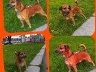 Фотография в Отдам даром - Приму в дар Отдам даром В связи со смертью хозяйки, собака ищет новых в Екатеринбурге 0