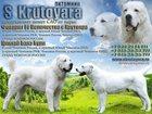 Изображение в Собаки и щенки Продажа собак, щенков Питомник С Крутояра предлагает к продаже в Екатеринбурге 40000