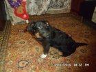 Фото в Потерянные и Найденные Найденные Найден пёсик среднего размера в ошейнике, в Екатеринбурге 0