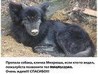 Фотография в Потерянные и Найденные Потерянные 16. 02. 2016 убежал пес, кличка Михрюша, в Екатеринбурге 0