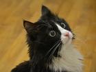 Фото в   Ищет добрые руки кот, снятый с дерева. Возраст в Екатеринбурге 0