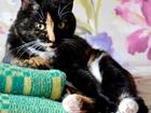 Изображение в   Ищет добрые руки спокойная ласковая кошка в Екатеринбурге 0
