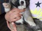 Фото в Собаки и щенки Продажа собак, щенков Очень милые щеночки хотят попасть в добрые в Екатеринбурге 1000