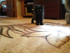 Смотреть фото Отдам даром Котята от кошки-крысоловки 35502662 в Екатеринбурге