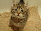 Изображение в Кошки и котята Продажа кошек и котят Котята жили в подвале. . . Их выловили, вылечили в Екатеринбурге 0