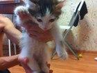 Изображение в Отдам даром - Приму в дар Отдам даром Вчера нашла под капотом соседней машины котенка. в Екатеринбурге 0