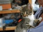 Изображение в   Отдается в добрые руки котенок-девочка. 2, в Екатеринбурге 0