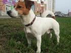 Увидеть фотографию Вязка собак племенной кобель-чемпион для вязки 38532437 в Екатеринбурге