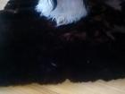 Просмотреть изображение Продажа собак, щенков ищу кобеля Ши-тсу 38584585 в Екатеринбурге