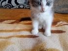 Милый котенок, Котёнку 1,5 мес