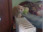 Кот для кошек, замечательные показатели