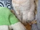Свежее фотографию Другие предметы интерьера Кот на вязку молодой котик 66488147 в Екатеринбурге