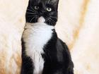 Смотреть фотографию  Кошечка Кармен, Огонь-девчушка 1 год 66538437 в Екатеринбурге