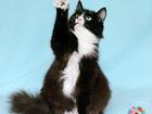 Новое изображение  Муся-Обнимашка, очень ласковая кошка 3г 67762535 в Екатеринбурге