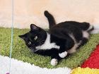 Новое фотографию  Кошка Кармен, огонь-девчушка 1,5 г, 69388611 в Екатеринбурге