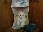 Смотреть фото  Пропал котик белый с чёрным пятнышком на голове 70216804 в Екатеринбурге