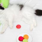 Котик Макарош, брутал и неженка, 3-5 лет